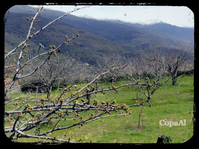 Valle_del_Jerte_04
