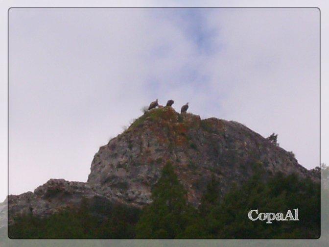 CopaAl_Cañón_Río_Lobos_13