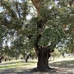 """Parque Natural de Cornalvo. """"Cornus Albus"""""""