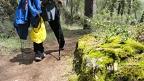 Beneficios de la práctica del senderismo (I mente)