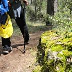 Beneficios de la práctica del senderismo en tu mente