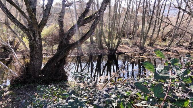 bosque-de-ribera