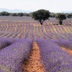 Brihuega.  El arcoíris del violeta