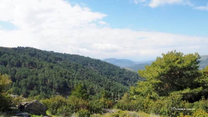 bosque paisajes
